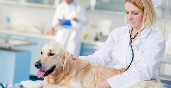Veste bună pentru veterinari