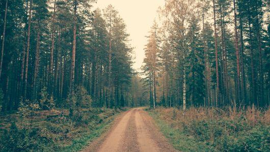 UDMR propune acordarea unui ajutor de stat pentru proprietarii de terenuri forestiere afectați de calamități naturale